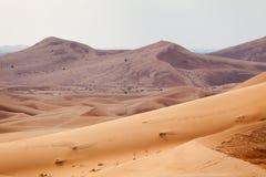Woestijnlandschap Stock Fotografie