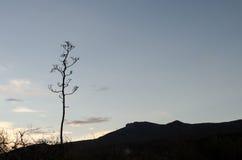 Woestijnlandschap bij schemering Stock Foto's