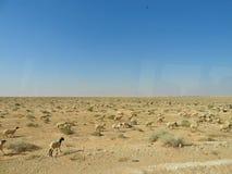 Woestijnlandschap en duidelijke hemel dichtbij Matmata in zuidelijk Tunesië, Noord-Afrika stock foto