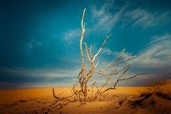 Woestijnlandschap met dode installaties in zandduinen stock afbeelding