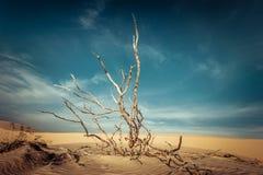 Woestijnlandschap met dode installaties in zandduinen Het globale verwarmen royalty-vrije stock afbeelding