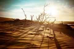 Woestijnlandschap met dode installaties in zandduinen onder zonnige hemel stock foto's