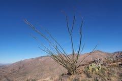 Woestijnlandschap van het Nationale Park van Saguaro, Arizona stock fotografie