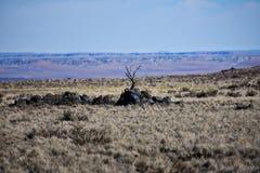 Woestijnmening stock afbeelding