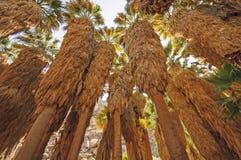 Woestijnpalmen in een Verborgen Oase Royalty-vrije Stock Foto's