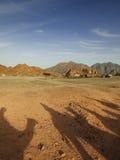 Woestijnreis op de dromedarissen Stock Afbeeldingen