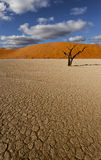 Woestijnscène Royalty-vrije Stock Fotografie