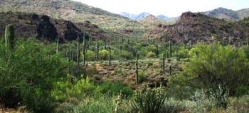 Woestijnscène in Arizona Stock Afbeeldingen