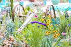 Woestijntuin met succulents Royalty-vrije Stock Afbeeldingen