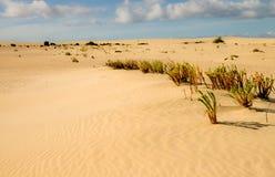 Woestijnvegetatie stock fotografie