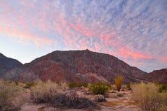 Woestijnzonsopgang Stock Afbeeldingen