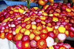 Wohlriechende Blume stockfotos