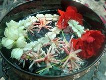 Wohlriechende Blumen in der Kälte und in der Trinkwasserschüssel Stockbilder