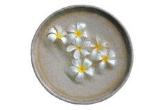 Wohlriechende Platte mit weißen Frangipaniblumen lizenzfreies stockbild