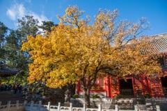 Wohlriechender sorgfältiger Hallenhof Hügel-Park Xiangshan Pekings Stockfotos