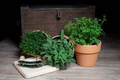 Wohlschmeckend, Salbei und Petersilie in einem Topf stockfoto