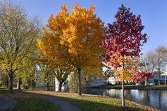 Wohnnachbarschaft mit Bäumen im Herbst stockbilder