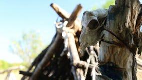 Wohnung des Stein- oder Bronzezeitalters, der Schädel und der Knochen der Tiere stock video footage