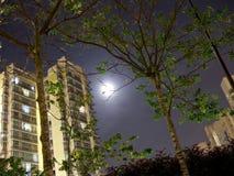 Wohnung und Bäume mit Mondscheinhintergrund Stockfotografie