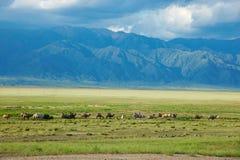 Wohnwagen der Kamele Stockfoto