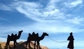 Wohnwagen der Kamele Lizenzfreie Stockfotografie