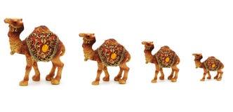 Wohnwagen der Kamele getrennt Lizenzfreie Stockfotos