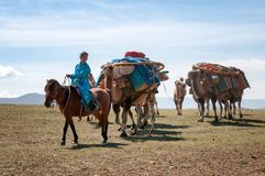 Wohnwagen der Kamele in Mongolei Stockfoto