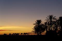 Wohnwagen, der zur Oase während des Sonnenuntergangs zurückgeht Stockfotografie