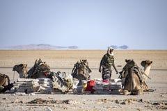 Wohnwagen, die Lecksteine vom See Assale transportieren Stockfotos