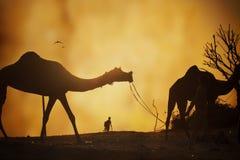 Wohnwagen von Kamelen bei Sonnenuntergang in der Sandwüste Stockfotos