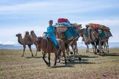Wohnwagen von Kamelen in Mongolei Lizenzfreie Stockbilder