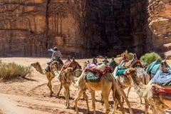 Wohnwagen von Kamelen in Wadi Rum, Jordanien lizenzfreies stockbild