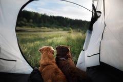 Wohonden in een tent op aard De vakantie van de zomer royalty-vrije stock foto