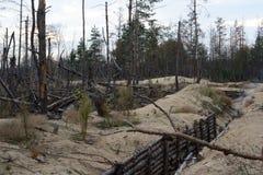 Wojna w Ukraina Lugansk region na Październiku 7, 2016 Drzewa da obrazy stock
