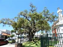 Wojny Domowej statua & bardzo stary drzewo który i rozgałęzia się za daleko CHŁODNO «skręta «spojrzenie przy bazą zdjęcia stock