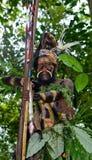 Wojownicy Papuaski plemię Yafi w tradycyjnych ubraniach, ornamentach i kolorystyce, Nowa gwinei wyspa, Zdjęcie Stock