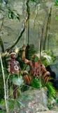 Wojownika plemię Yaffi w wojennej farbie z łękami i strzała w jamie Nowa gwinei wyspa Obraz Stock