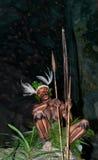 Wojownika plemię Yaffi w wojennej farbie z łękami i strzała w jamie Nowa gwinei wyspa Obrazy Stock