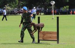 Wojskowego psi szkolenie Zdjęcie Stock
