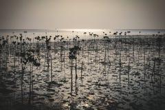 Wok Tum, Hin Kong, Plai Lem beach area of wetland with mangrove forest at Koh Pha ngan island beachfront sea shore area at low tid Stock Image