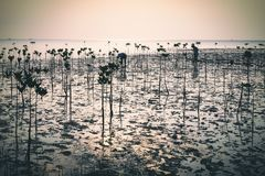 Wok Tum, Hin Kong, Plai Lem beach area of wetland with mangrove forest at Koh Pha ngan island beachfront sea shore area at low tid Royalty Free Stock Images
