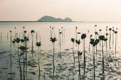 Wok Tum, Hin Kong, Plai Lem beach area of wetland with mangrove forest at Koh Pha ngan island beachfront sea shore area at low tid Royalty Free Stock Photography