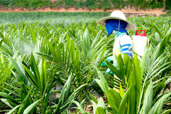Woker an der Palmölkindertagesstätte Stockfotos
