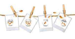 wokoło goldfish wizerunku humous doskakiwania zdjęcia stock