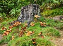 wokoło jesień grzybów fiszorka drzewa Zdjęcia Royalty Free