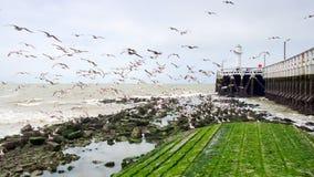 wokoło latających boardwalk seagulls Obraz Stock