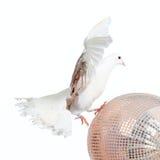wokoło pojęcia gołąbki chodzącego światu Zdjęcia Royalty Free