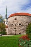wokoło Tallinn spaceru Zdjęcie Royalty Free