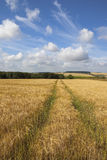 Wolds barley Royalty Free Stock Photo