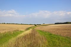 Wolds bridleway Immagine Stock